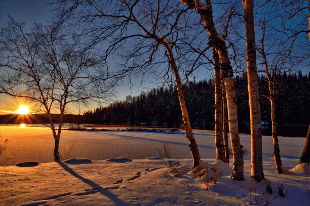 冬の写真.png
